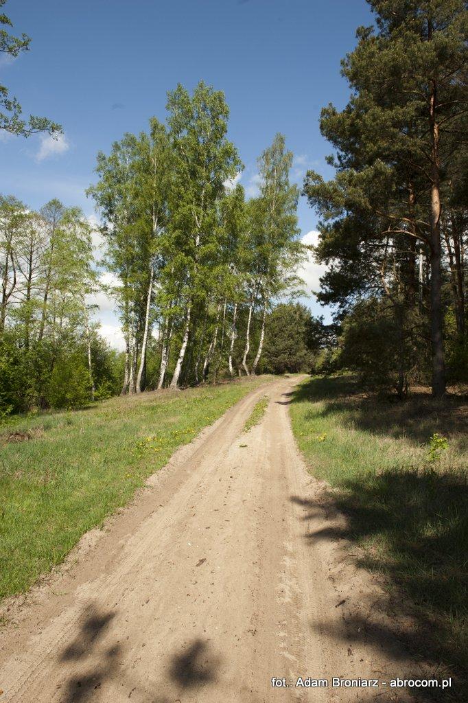 Droga na Gustawów