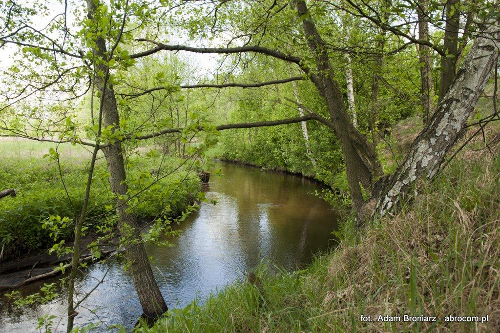 Rzeka Luboczanka